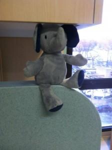 Hospital Elephant
